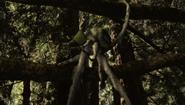 FIW 1x13 Squibbon holding capsule
