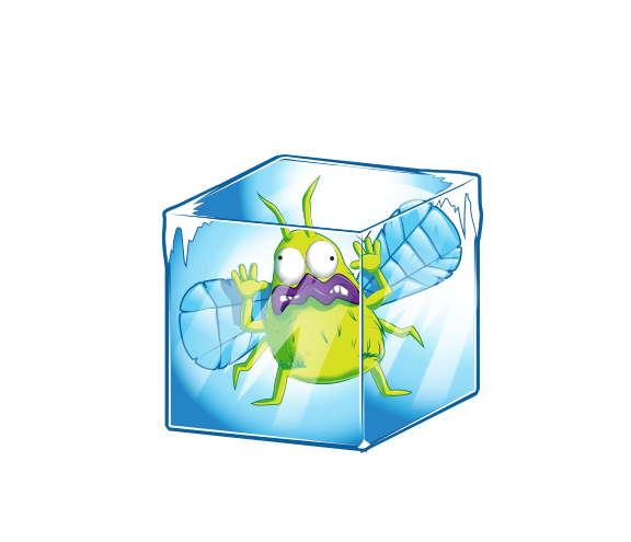Frosty Fly
