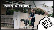 The Inbestigators 🔎 Bite Size 🥑 46