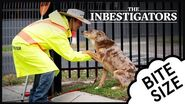 The Inbestigators 🔎 Bite Size 🍇 41