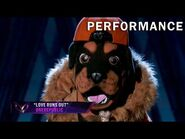 """Rottweiler sings """"Love Runs Out"""" by OneRepublic - THE MASKED SINGER - SEASON 2"""