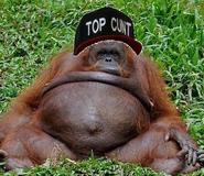 Top chunky monke