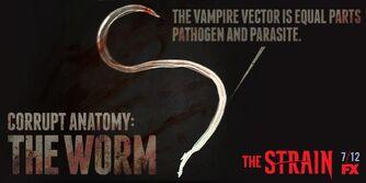 Corrupt-Anatomy-The-Worm-the-strain-fx-38617382-1024-512.jpg