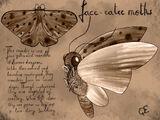 Face-Eater Moths