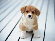 Puppy 2 kbhb4a
