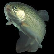 175px-Rainbow trout transparent