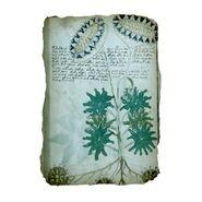 Manuscrito Voynich00