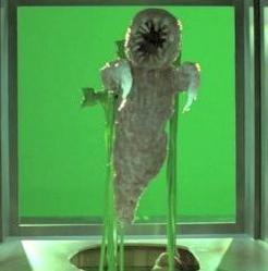 Floating Leech Creature