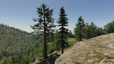 Tahoe Forest