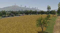 Kansas Sunflower Fields