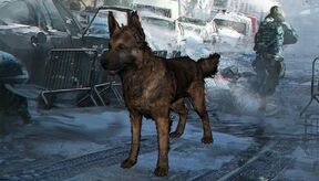 400px-Thedivisiondogs.jpg