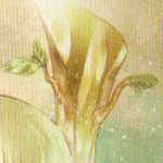 Cebolleta Muy Asombrosa.png