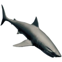 SharkFarket.png