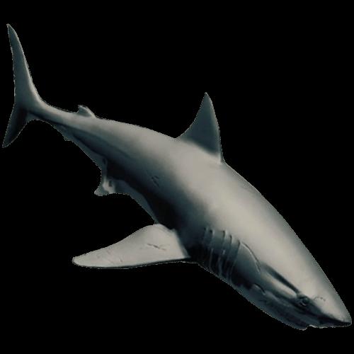 Shark White Bottom Paint