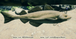 Fish Cod.png