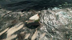 Shark-head-the-forest-1-0-dirty (3).jpg