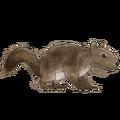 NatureGuideSquirrel.png