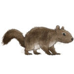 NatureGuideSquirrel.png