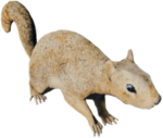 SquirrelFarket.png