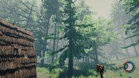 Short pine.jpg