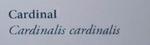 CardinalNaturesGuide.png