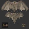 Bat-c.png