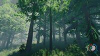 Tall bushy tree.jpg