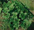 Bush lush.jpg