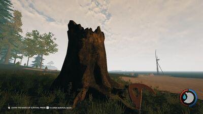 Large Tree Stump.jpg