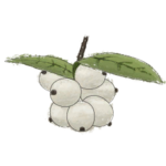NatureGuideSnowberry.png