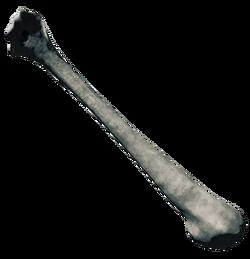 BoneFarket.png