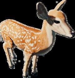 DeerFarket.png