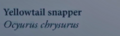 YellowtailSnapperNaturesGuide.png