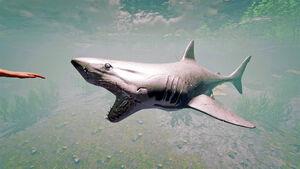 SharkShot1.jpg