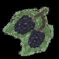 NatureGuideBlackberry.png