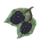 NatureGuideBlackberry.png