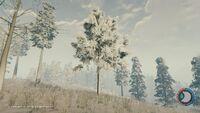 Winter medium bushy.jpg