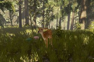 Deer-the-forest-1-0-dirty (1).jpg