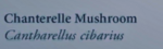 ChanterelleMushroomNaturesGuide.png