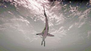 SharkShot2.jpg