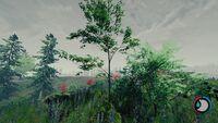 Bushy sapling.jpg