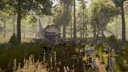 Plane-the-forest-1-0-dirty (11).jpg