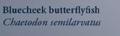 BlueCheekButterflyfishNaturesGuide.png