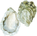 Oyster dif.png