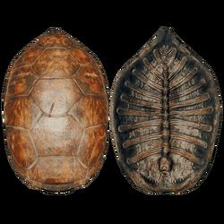 TurtleShellNewFarket.png