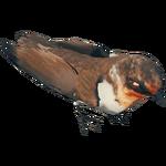 BrownBirdFarket.png