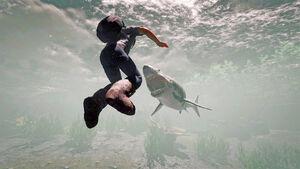 SharkShot3.jpg
