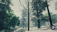Tall bare tree.jpg