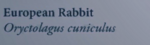 EuropeanRabbitNaturesGuide.png