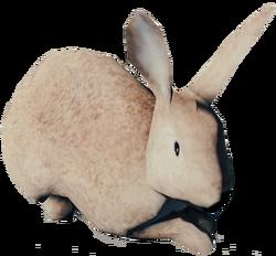 RabbitFarket.png
